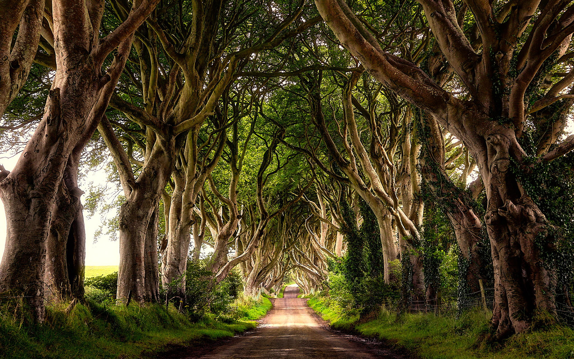 Game of thrones tours - dark hedges - waterfall caves